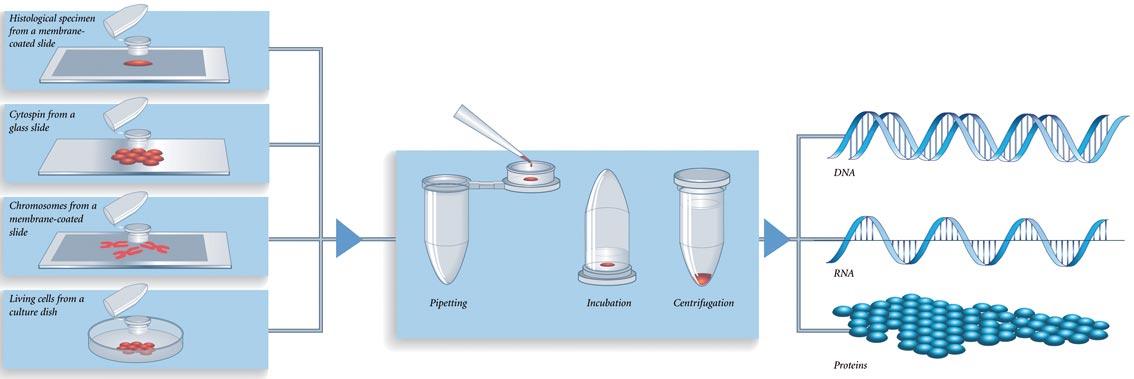 singel-cell handling