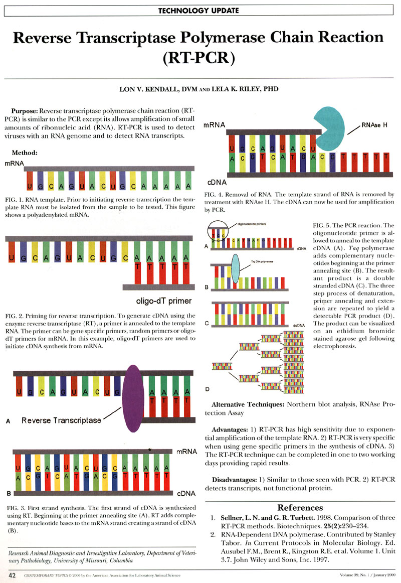 poster pcr poster rt pcr
