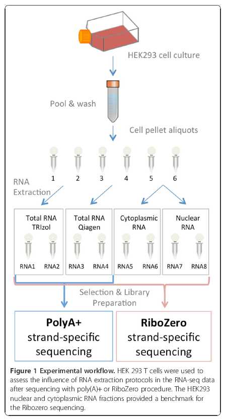 Rna Integrity And Quantification
